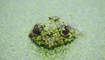 covered frog image